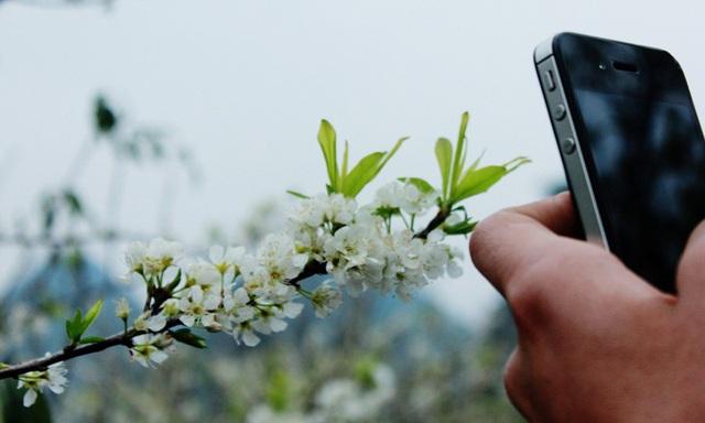 Giới trẻ đổ xô về Mộc Châu ngắm hoa mận trắng - 6
