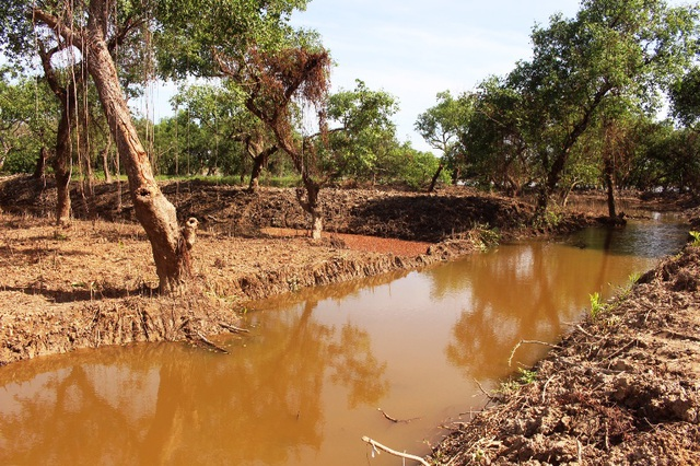 Phá rừng bần cổ thụ đào ao nuôi tôm chỉ vì tin đồn được đền bù từ Formosa?