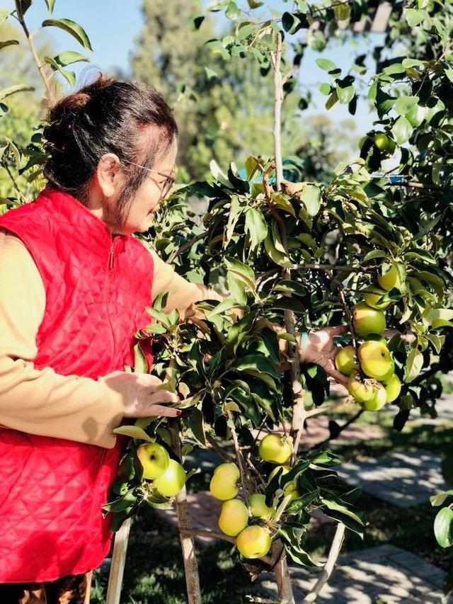 Khu vườn tiền tỷ lúc lỉu cây trái của Bằng Kiều trên đất Mỹ - 13