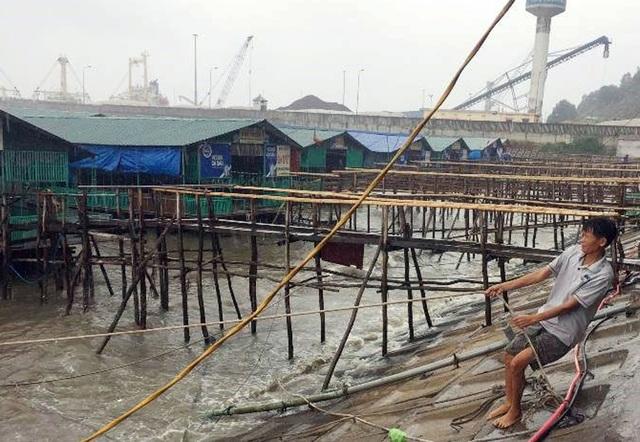Chủ một bè nổi kinh doanh món mực nháy nổi tiếng ở Vũng Áng, thị xã Kỳ Anh, Hà Tĩnh đang kéo dây, chằng chéo lại quán hàng trước khi đi tránh bão.