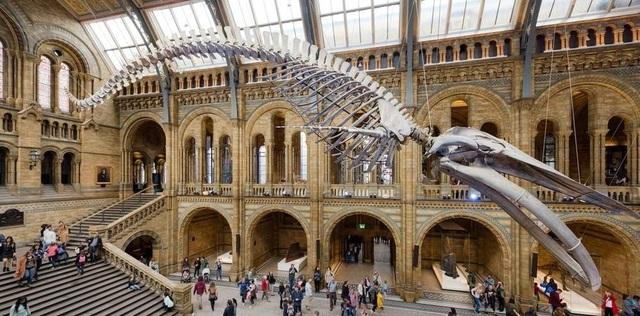 Bảo tàng lịch sử tự nhiên.
