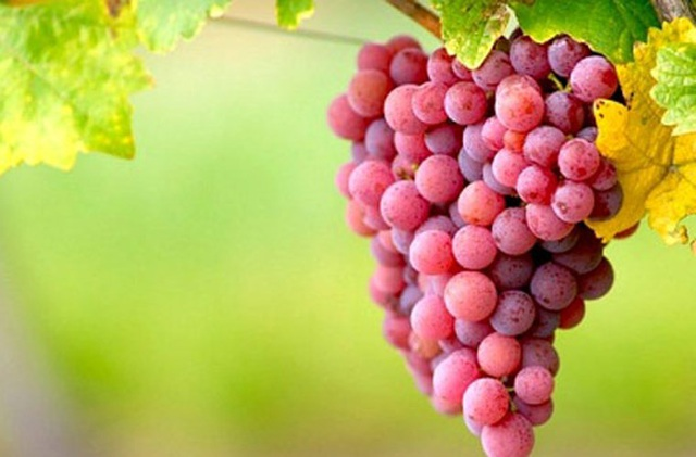Mẹo hay giúp bảo quản trái cây tươi lâu không cần đến tủ lạnh - 5