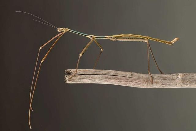 Đời sống tình dục phức tạp của một số loài sâu bọ - 4