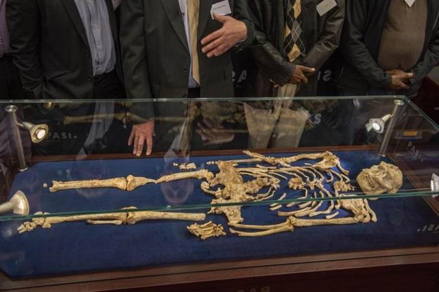 Bộ xương này hiện được trưng bày ở Nam Phi – nơi nó được tìm thấy.