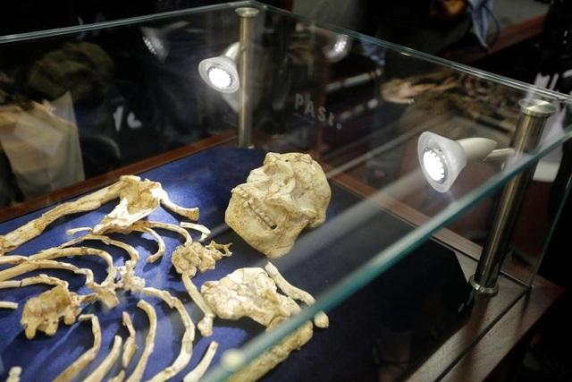 Phát hiện bộ xương bốn triệu năm tuổi hoàn thiện nhất của tổ tiên loài người - 1