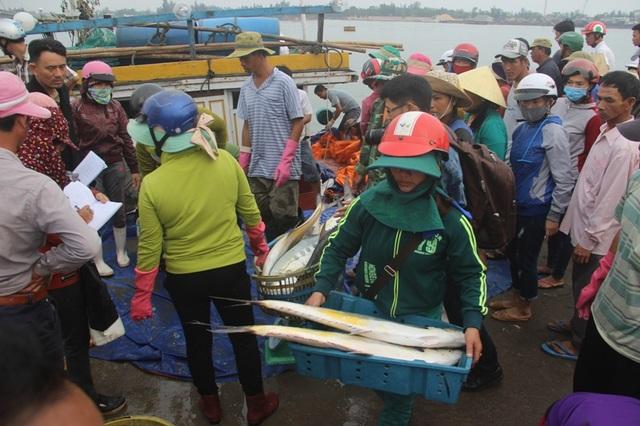 Lượng cá đánh bắt được trong chuyến biển lần này đã mang về cho anh Tuấn hàng tỷ đồng