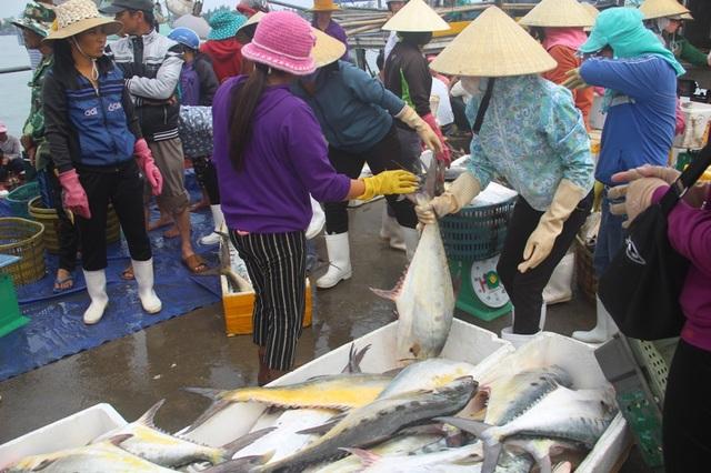 Mỗi con cá bè có trọng lượng từ 5-7 kg
