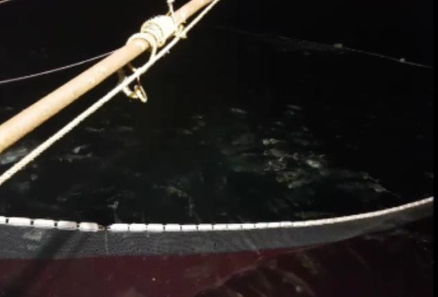 Chủ tàu chia sẻ hình ảnh ban đầu cá vẫn bơi rất linh hoạt khi được quây trong lưới, chứng minh mình không sử dụng vật liệu nổ.