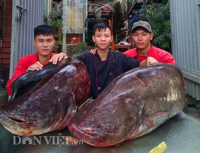 """Cận cảnh cặp cá leo """"khủng"""" nặng hơn1 tạ xuất hiện ở Thủ đô - 1"""