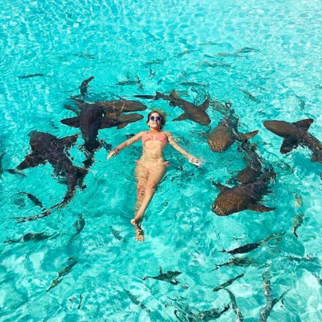 Chụp ảnh cùng đàn cá mập