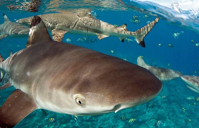 Du khách hốt hoảng khi phát hiện cá mập bơi... ngay dưới chỗ ngủ - 1