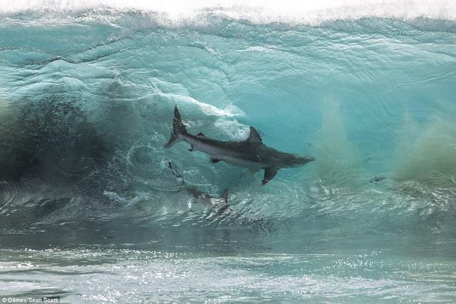 Rợn người trước cảnh đàn cá mập hàng trăm con bơi sát nhóm học sinh - 5