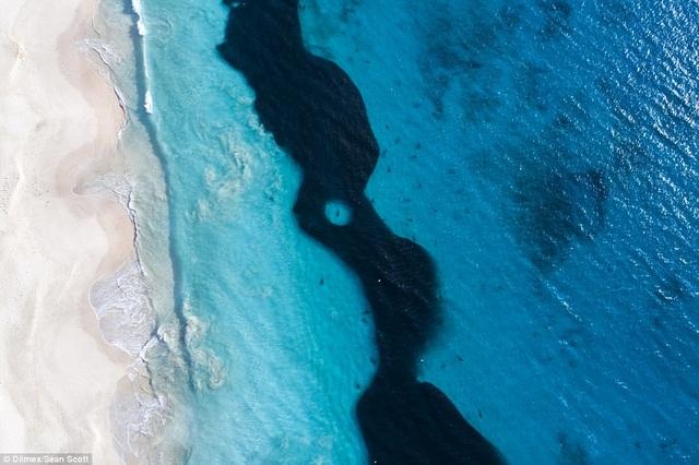 Khoảnh khắc chụp từ trên cao cho thấy hàng trăm con cá mập đang bơi gần bờ