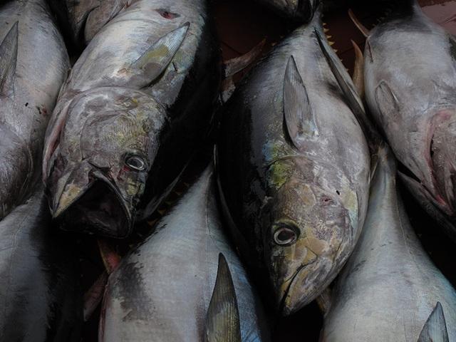 Là loại cá béo chứa nhiều chất omega-3, giúp tăng tuần hoàn máu. Nó rất hữu ích cho cả bạn và cả đối tác.