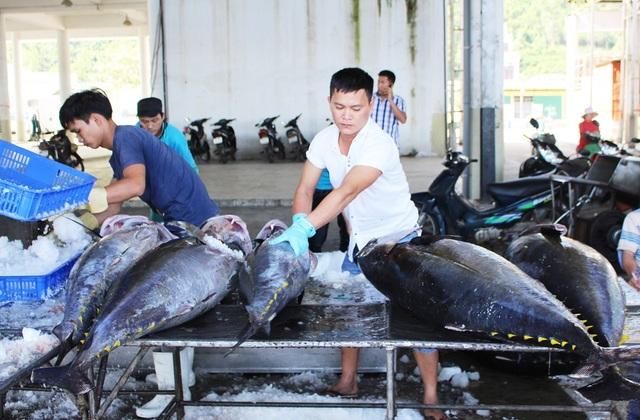 Thu mua cá ngừ đại dương ở cảng cá Hòn Rớ, TP Nha Trang - Ảnh: Viết Hảo