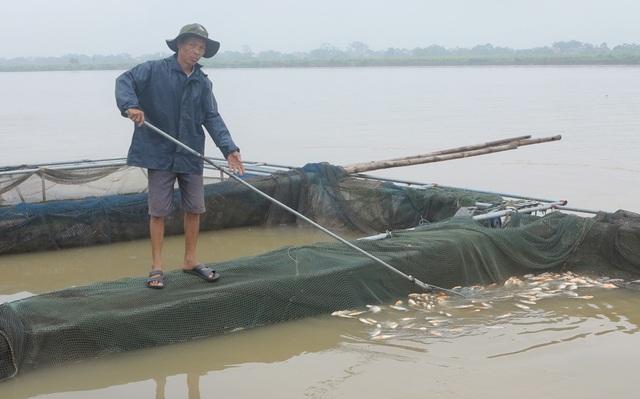 Khoảng 240 tấn cá nuôi lồng trên lưu vực sông Đà tại tỉnh Phú Thọ đã bị chết, nguyên nhân ban đầu là do ảnh hưởng của việc hồ thủy điện Hòa Bình xả lũ. (Ảnh: Báo Phú Thọ).