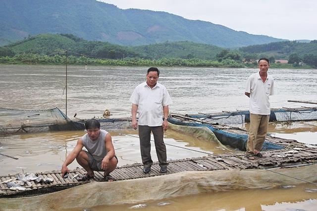 Cá nuôi lồng của một hộ dân ở huyện Kỳ Sơn (Hòa Bình) bị chết do việc xả lũ của thủy điện Hòa Bình, khiến người nuôi xót xa. (Ảnh: Đàm Quang).