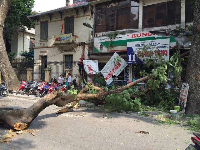Cây phượng đổ vắt ngang đường Phan Huy Chú.