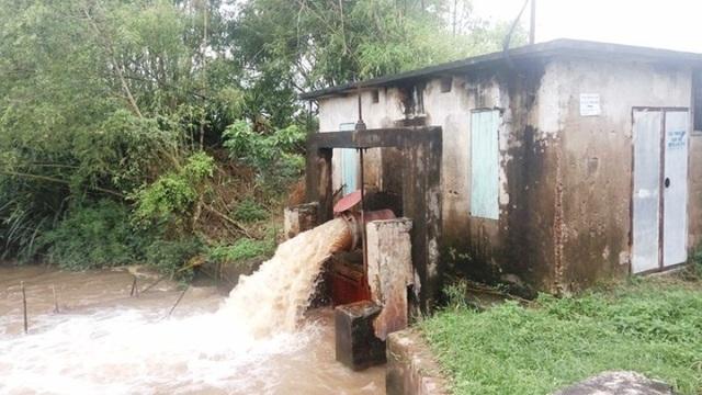 Các trạm bơm hoạt động hết công suất để xả nước cứu lúa
