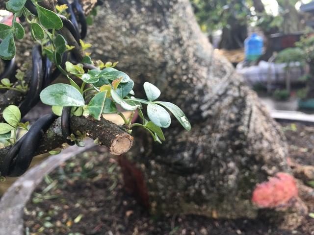 Lá cây cần thăng