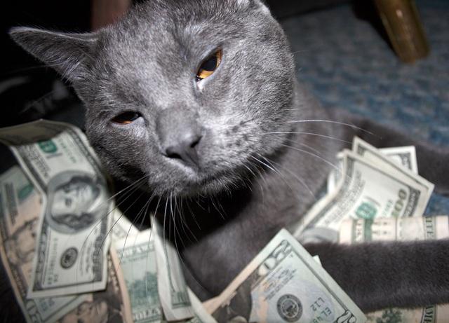 2 chú mèo được thưà kế tới 300 ngàn USD (ảnh minh họa)
