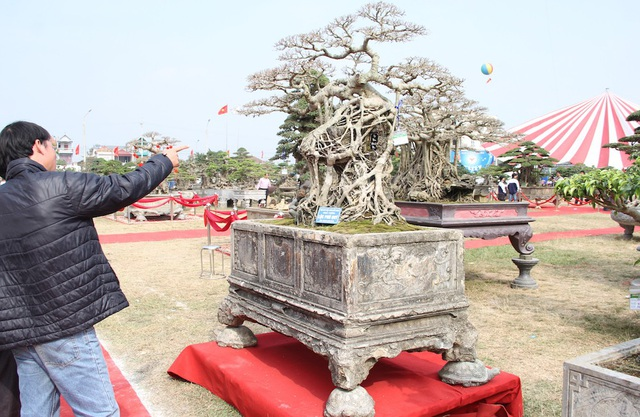 Năm 2009, anh Ngọc mua siêu cây này từ một dân chơi Bắc Ninh với giá là 300 triệu đồng.