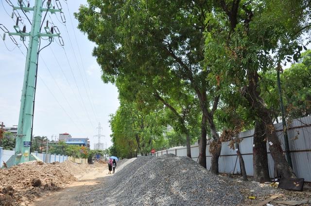 Cận cảnh tuyến đường Hà Nội dự kiến chặt hạ hơn 1300 cây xanh - 12