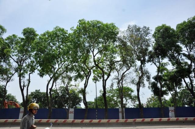 Theo kế hoạch, đơn vị thi công sẽ chặt hạ hơn 1.000 cây, di chuyển 158 cây, cắt tỉa 142 cây. Trong số này có 986 cây xà cừ đường kính lớn; còn lại là, hoa sữa, phượng vĩ, sấu...