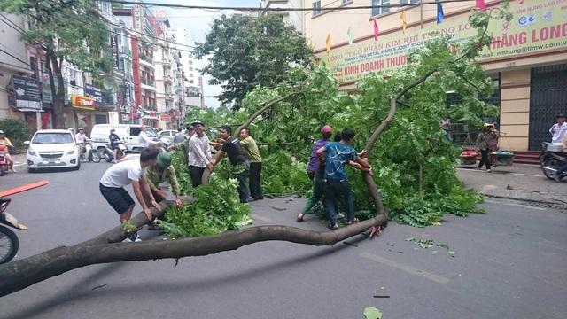 Cây xanh đổ gần ngõ 2 Giảng Võ Hà Nội lúc 15h50 chiều nay. Người dân tập trung kéo cây đổ vào ven đường.