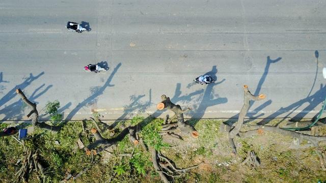 Đoạn đường Phạm Văn Đồng vắng bóng mát sau khi hàng cây được xử lý đánh chuyển, chặt hạ.