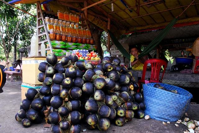 Bên cạnh cây thốt nốt đực cho đường, cây cái cho trái lấy cơm, ăn tươi cũng đem lại thu nhập cao cho nông dân.