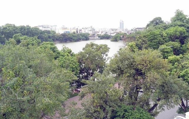 Chủ tịch UBND TP Hà Nội Nguyễn Đức Chung khẳng định không có chuyện thay cây xanh quanh hồ Hoàn Kiếm