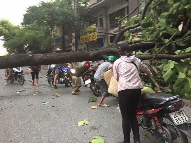 Gió lốc quật ngã nhiều cây xanh trên đường phố