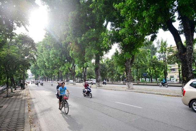 Việc chặt hạ, đánh chuyển cây trên đường Kim Mã lần này để phục vụ thi công tuyến đường sắt đô thị Nhồn - ga Hà Nội.