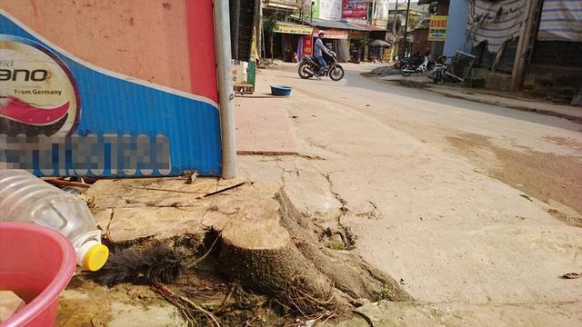 Hàng loạt cây xanh trồng sát mép đường ở khu vực xóm chợ Hạ Bằng đã bị chặt bỏ.