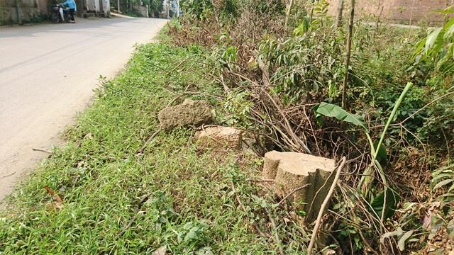 Thêm một xã ở Hà Nội bất ngờ chặt hàng loạt cây xanh - 7