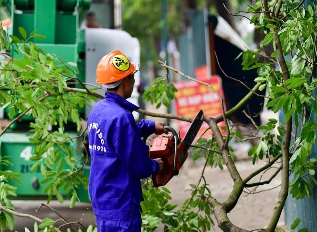 Đại diện đơn vị chịu trách nhiệm xử lý cây cho biết, cây xanh trên đường Phạm Văn Đồng rất dày, bên dưới vướng nhiều công trình ngầm nên khó giữ được bộ rễ. Đơn vị sẽ vừa xử lý vừa đánh giá xem cây nào có thể đánh chuyển, cây nào buộc phải chặt hạ.