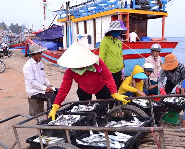 Các cảng cá hoạt động tấp nập trở lại