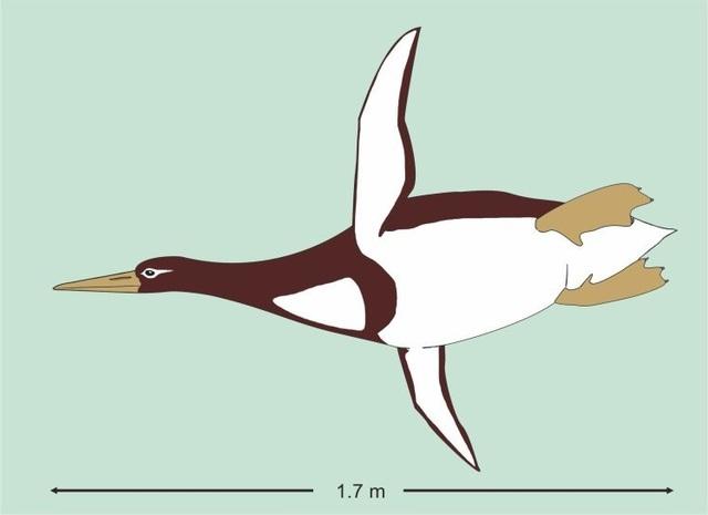 Phát hiện xương chim cánh cụt cổ có kích thước bằng con người ở New Zealand - 1