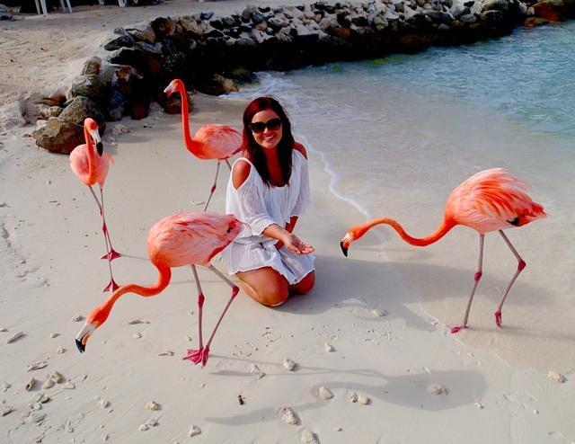Bầy chim hồng hạc trở thành nhân tố hút khách đến với bãi biển