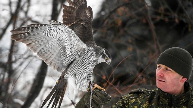 Binh sĩ huấn luyện chim săn quạ bảo vệ Điện Kremlin (Ảnh: Sputnik)