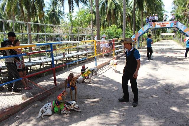"""Du khách thích thú xem chó """"cõng"""" khỉ thi chạy - 2"""
