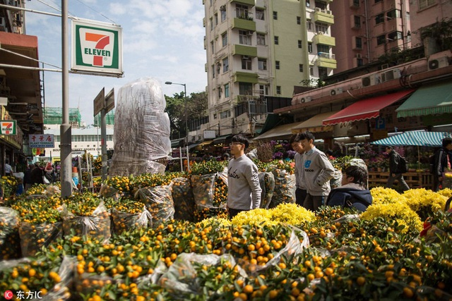 Người dân Hong Kong nô nức đi xem hoa và cây cảnh tại chợ hoa Victoria Park (Ảnh: Sina)