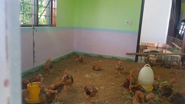Nhiều hộ dân ở xã Quang Hưng đã cho gà, lợn lên nhà ở nhằm tránh việc nhà bị phá dỡ (Ảnh: Dân việt).