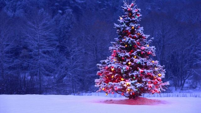 Vì sao lễ Giáng sinh nhất định phải có cây thông? - 4
