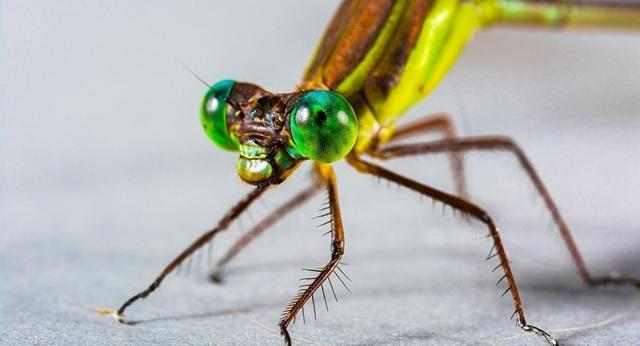 Xâm nhập vào cơ thể côn trùng để tạo ra máy bay sinh học - 1
