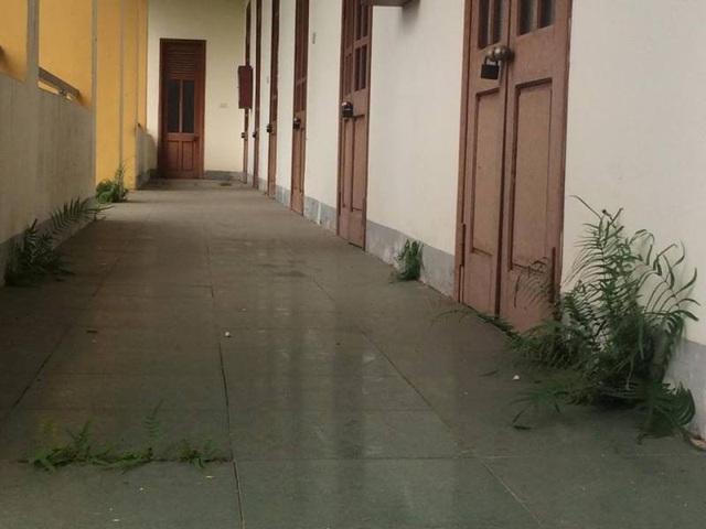 Trường bị xuống cấp nghiêm trọng, thậm chí có dãy nhà dường như bị bỏ hoang cỏ mọc xanh rì như thế này