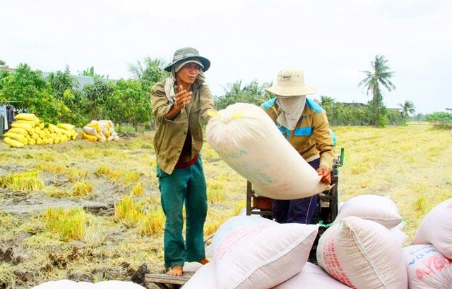 ĐBSCL có thế mạnh là vùng sản xuất nông nghiệp lớn nhất nước, chiếm hơn 40% sản lượng toàn quốc, trong đó lúa chiếm 56% của cả nước