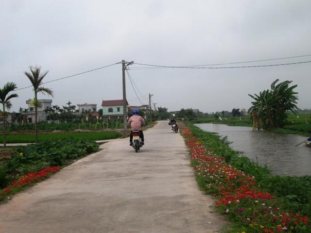Những con đường bê tông hóa nông thôn mới hai bên được tô thắm bằng những đóa hoa mười giờ đầy màu sắc
