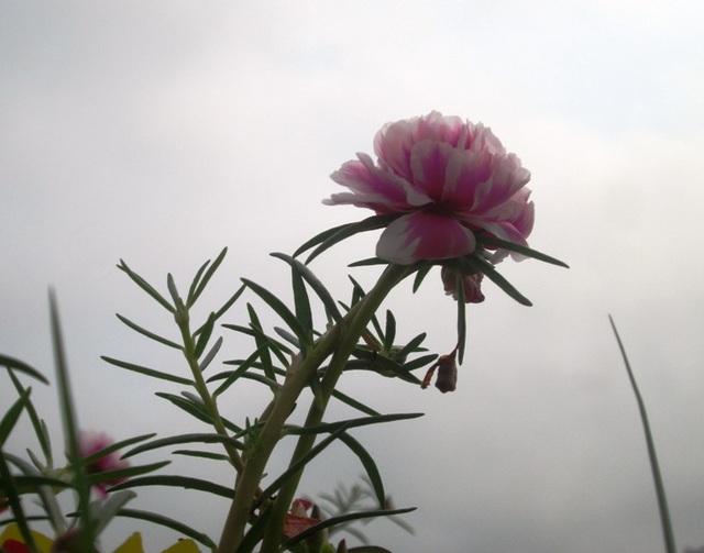 Những đóa hoa thi nhau khoe sắc